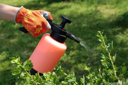 Как правильно обрабатывать пруды от водорослей медным купоросом?