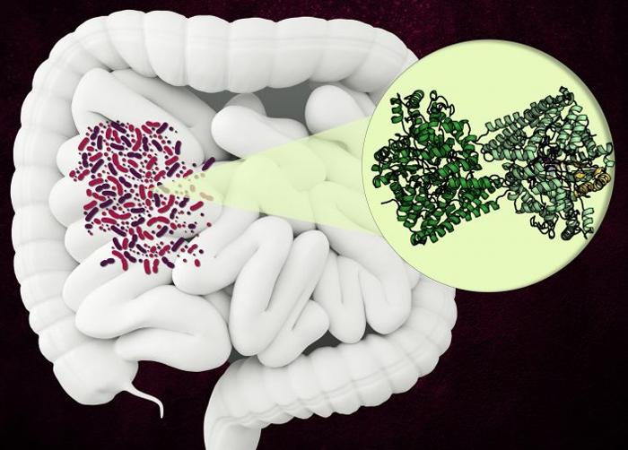 Обнаружен необычный бактериальный фермент, который может стать новой мишенью для антибиотиков