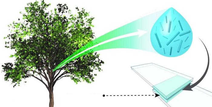 Создан супер-клей из растительных частиц и воды