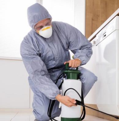 Комплексная защита от вирусов и насекомых: как обезопасить себя от беды