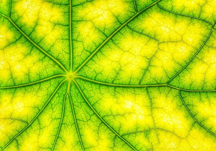 Механизм фотосинтеза перезаряжает солнечную энергию для преобразования водородного топлива