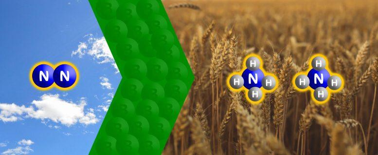 Исследователи из Баварии снижают содержание азота с помощью бора