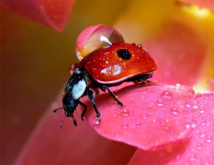 Химикаты с «запахом страха» от вредных насекомых